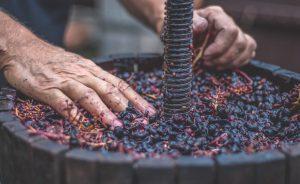 vino de cangas vino de calidad tintos y blancos