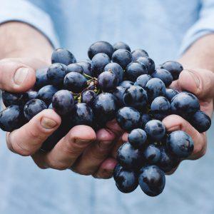 variedades uvas vino de cangas asturias